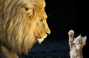 leon-y-gato